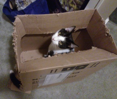 In his box...that he destroyed