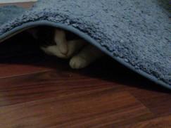 You are like a ninja cat...