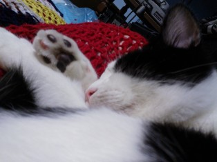 Look at his cute paw!