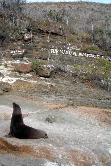 Sea Lion Graffiti