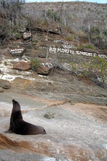 Sea Lion Graffiti