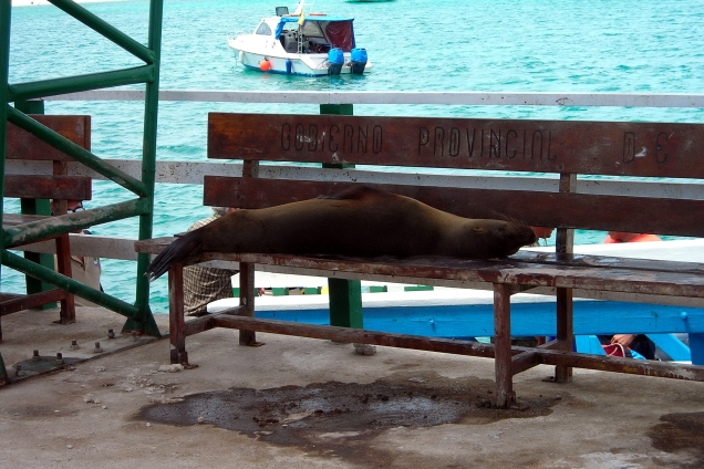 Homeless sea lion?