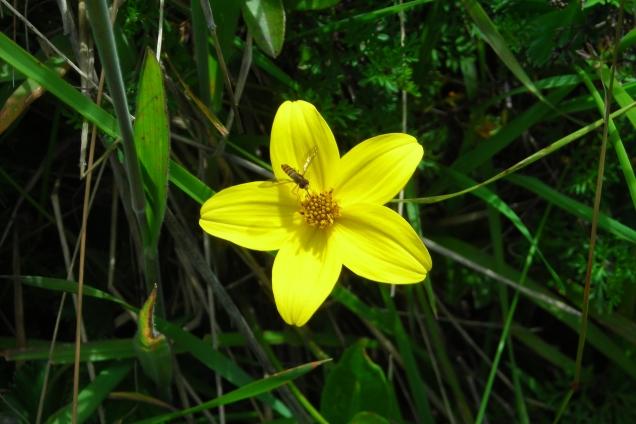 Ecuador flower