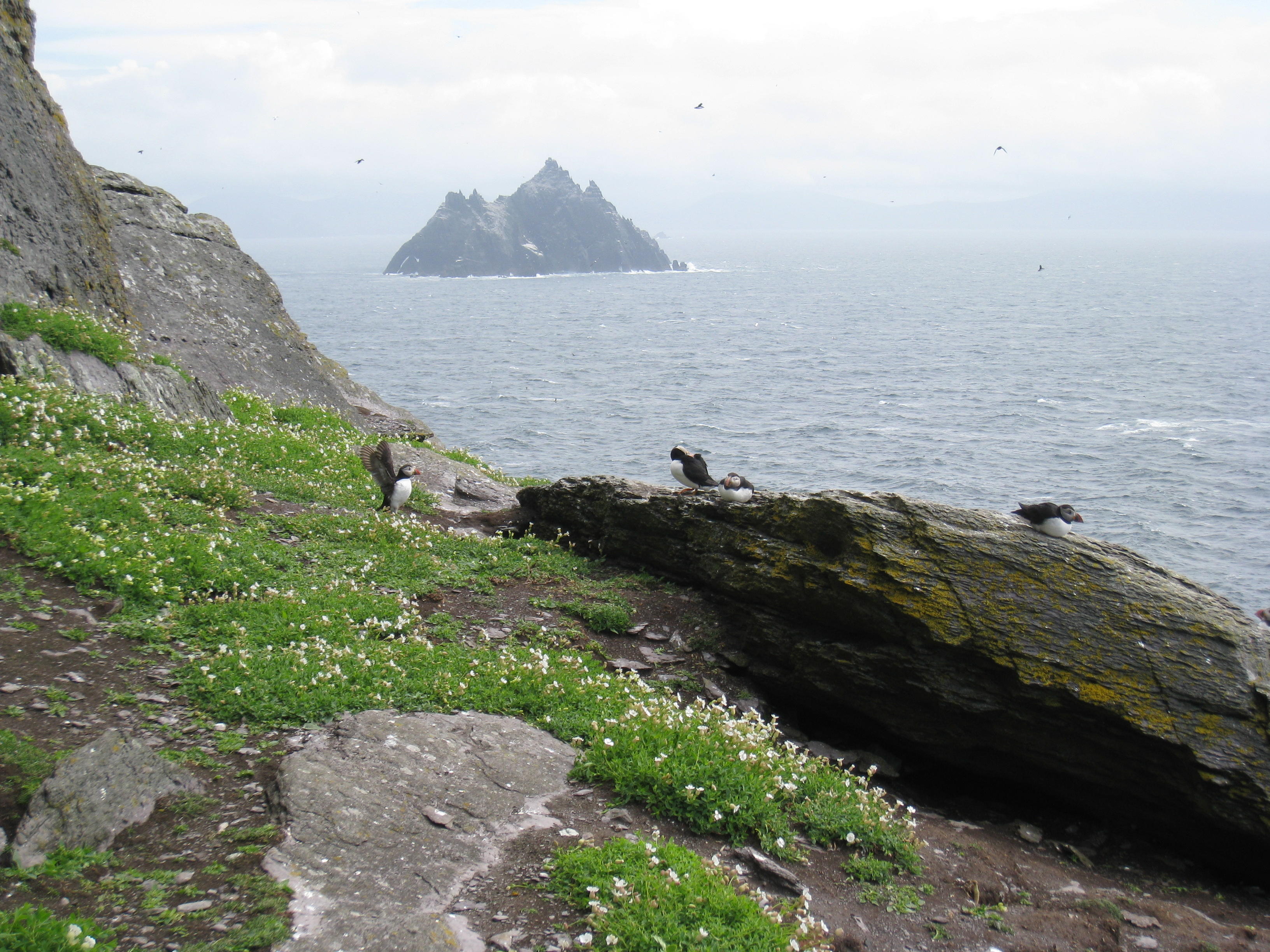 essay on skellig Nine miles off the coast of county kerry in the west of ireland there are two small rocky islands peeking out of the atlantic ocean the larger of the two, skellig michael, is home to something quite extraordinary – a 1400 year old monastery which only a handful of people get to see each year .