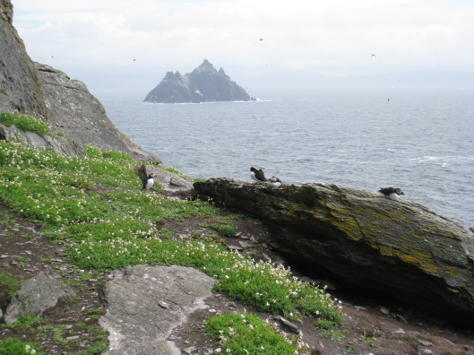 Puffins, with Little Skellig in the distance