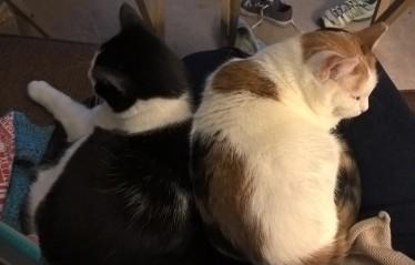 Warm cuddles.