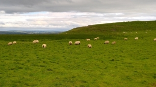 Sheep field
