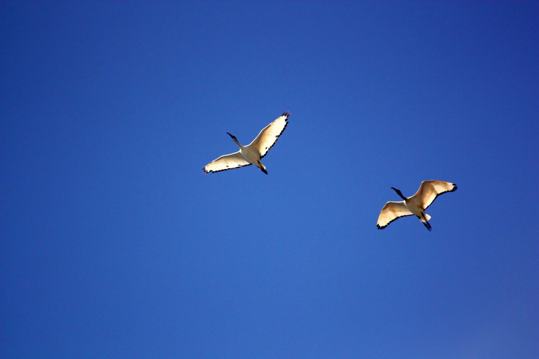 flight sky bird blue