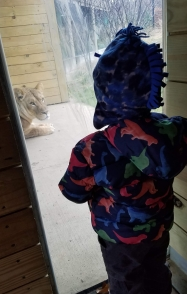 My kid meeting the new lion